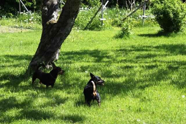 Lexie och Tuva på grönbete