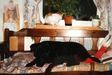 Svarta Molly som vi kallade henne när vi var små och katten Pelle i fönstret. Tyvärr tittar de på annat spännande än in i kameran :)