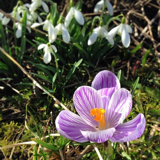 Våren har dessutom kommit till våran trädgård!